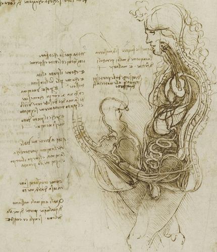 Совокупление мужчины и женщины в разрезе. Леонардо да Винчи.